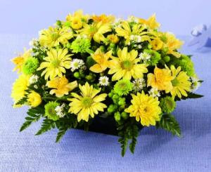An abundance of flowers in yellows and greens makes a cheerful statement. Yellow daisy and cushion Poms, yellow Alstroemeria and green button Poms are interspersed with green Hypericum berries and white Monte Casino. Pretty as a picture, and ready to decorate an end table or serve as a centerpiece.