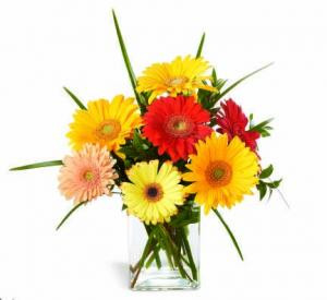 "Warning! Gerbera Daisies may cause Happiness! This assortment of colorful Gerbera daisies is sure to bring smiles to whomever receives them. Great for any occasion, or just to say a bright ""hello""."