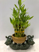 Lucky Bamboo Planter with Lying Elephants