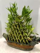 Lucky Bamboo XL Planter