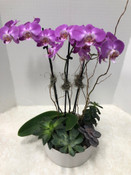 Orchid and Succulent Garden