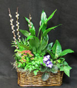 Mixed floliage plants growing in a wicker basket. Peace lily, kalanchoe, ivy, pothos and other plants. Pussy willows in Spring time, we use branches other times.