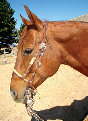 straight-up-bridle2.jpg