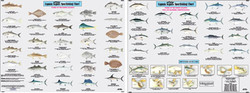 Species: Fishes of the North Atlantic Identification Chart