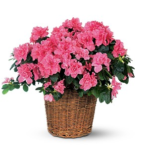 Blooming Gardens of Miami Florida Plants Care Tips