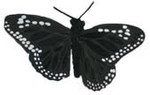Black Feather Butterfly (2.75 inch)