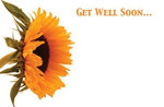 Gell Well Soon - Sunflower