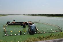 Food Fish Grader Net