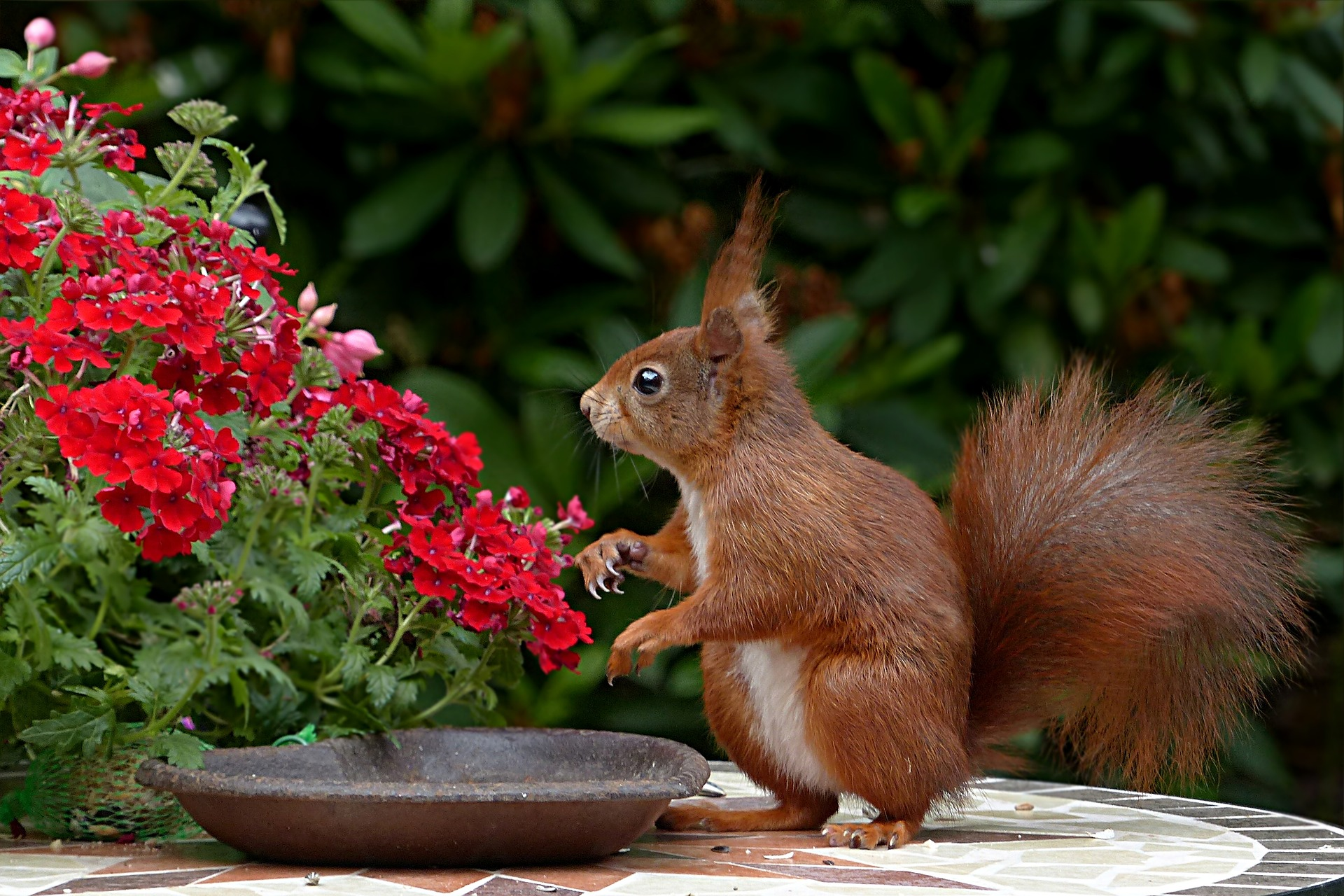 from to squirrels beds out of pin flower garden repel keep squirrel repellent how your