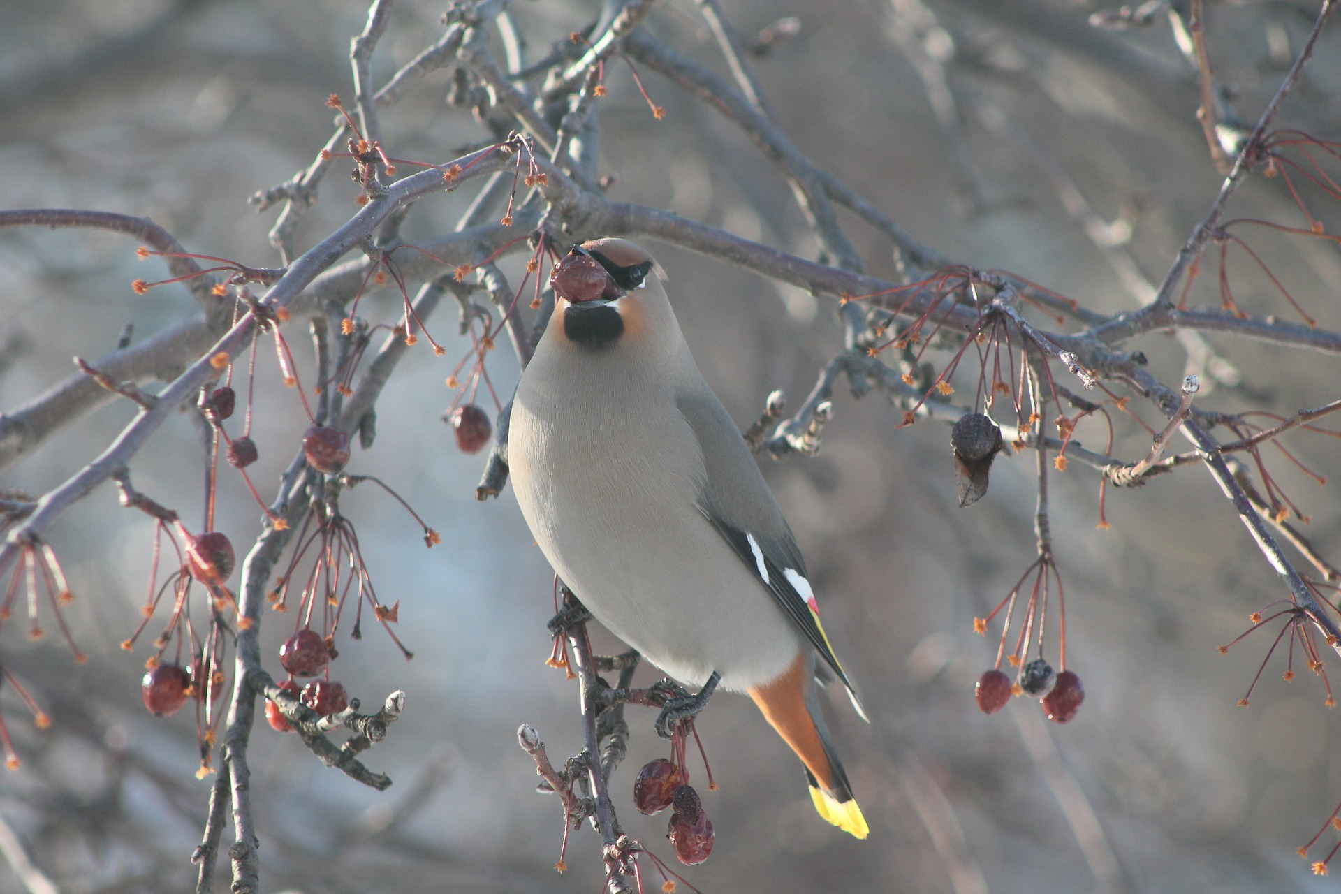 bird-3791604-1920.jpg