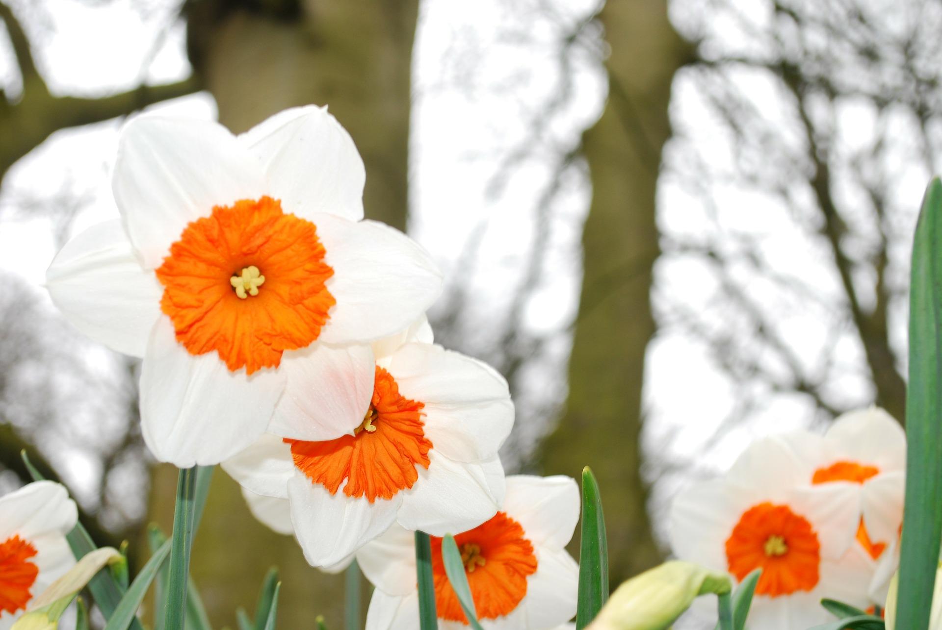 bloom-283020-1920.jpg