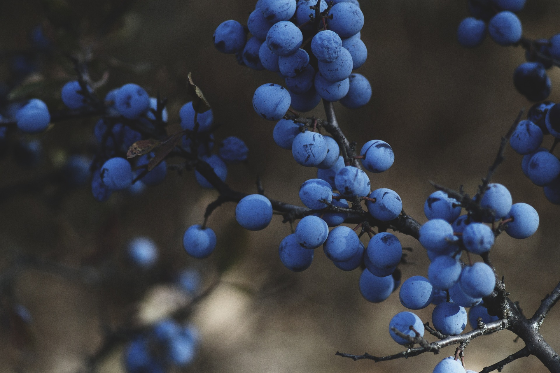 blueberries-1031221-1920.jpg