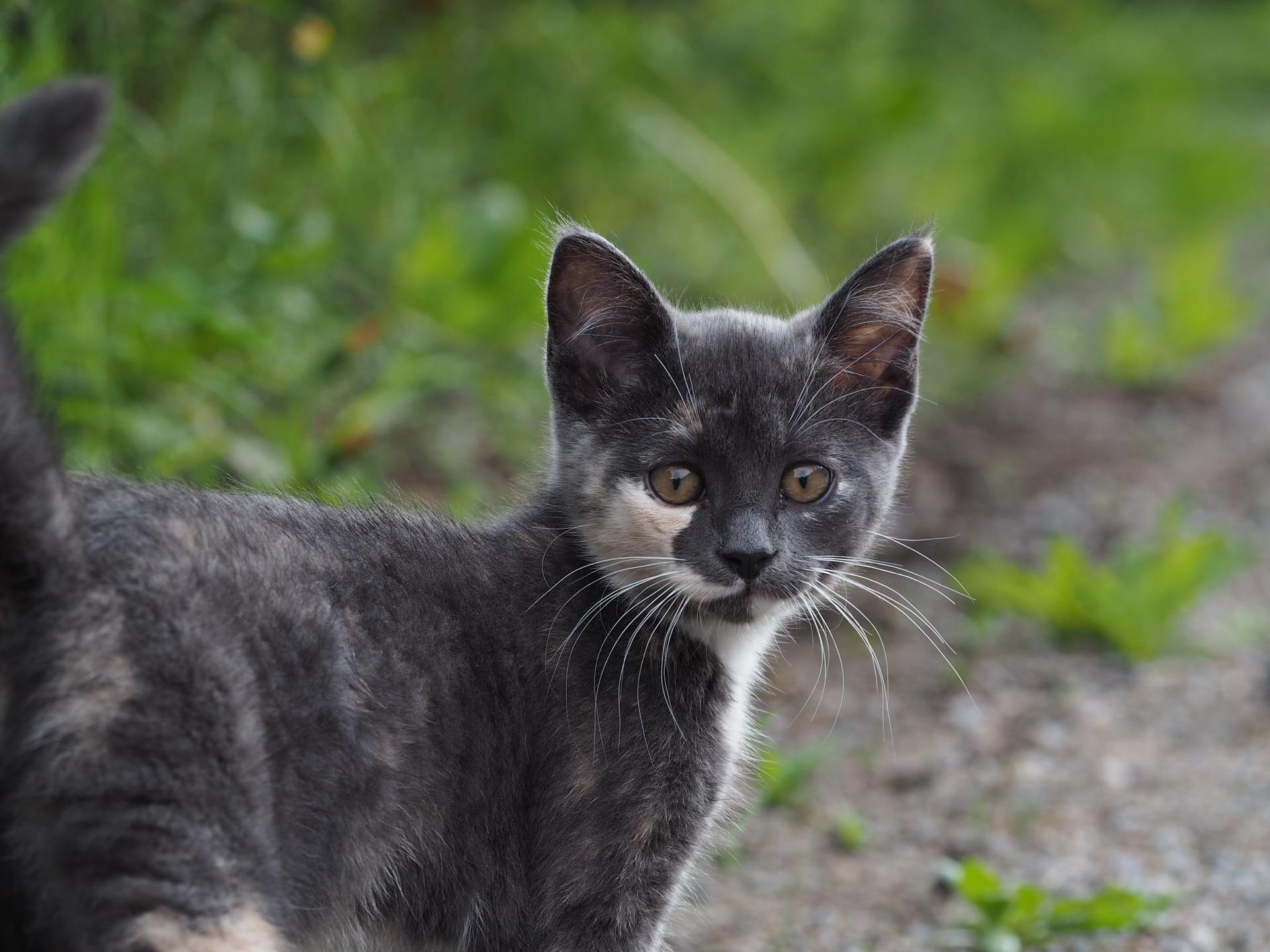 cat-1516289-1920.jpg