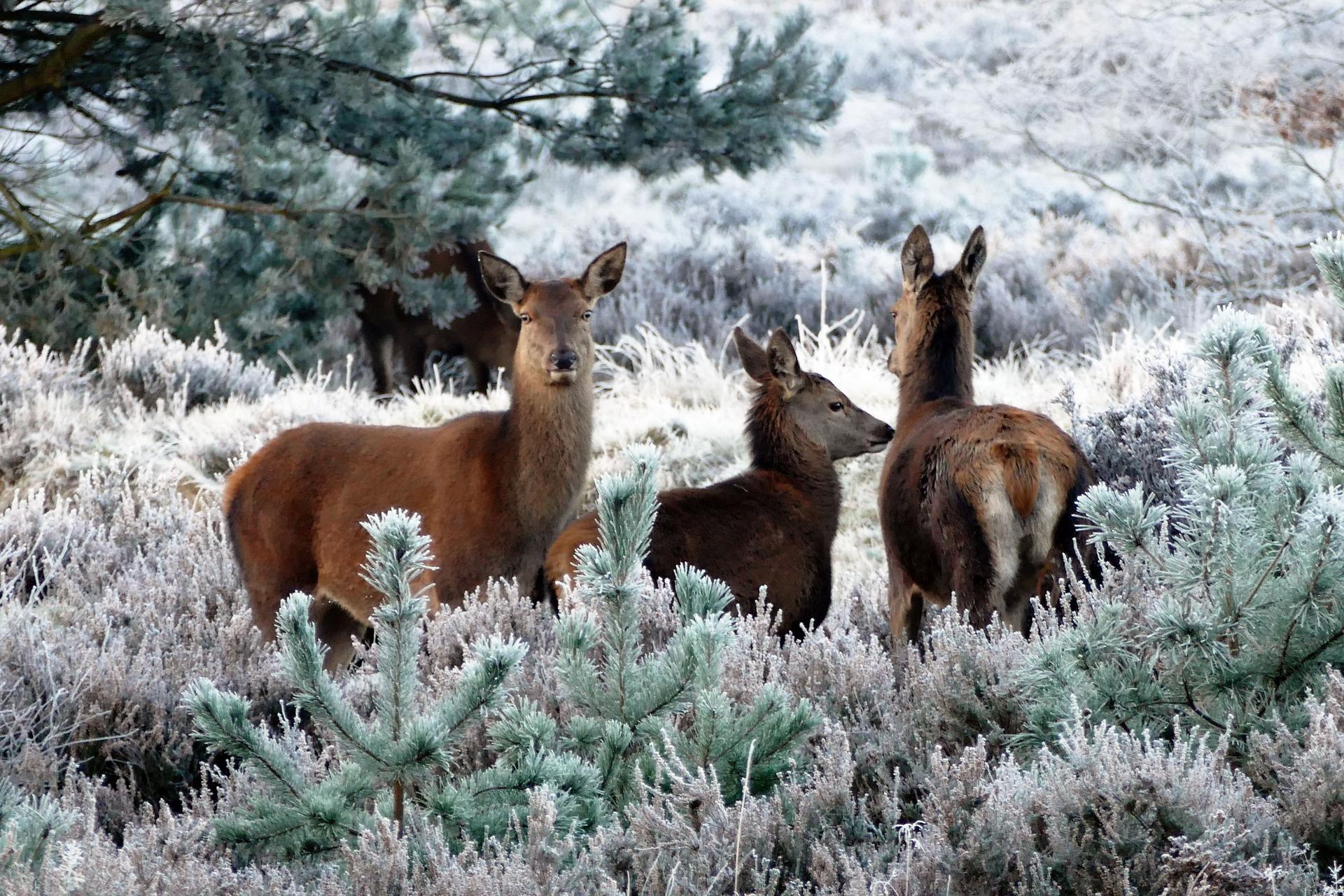 deer-1940368-1920-3-.jpg