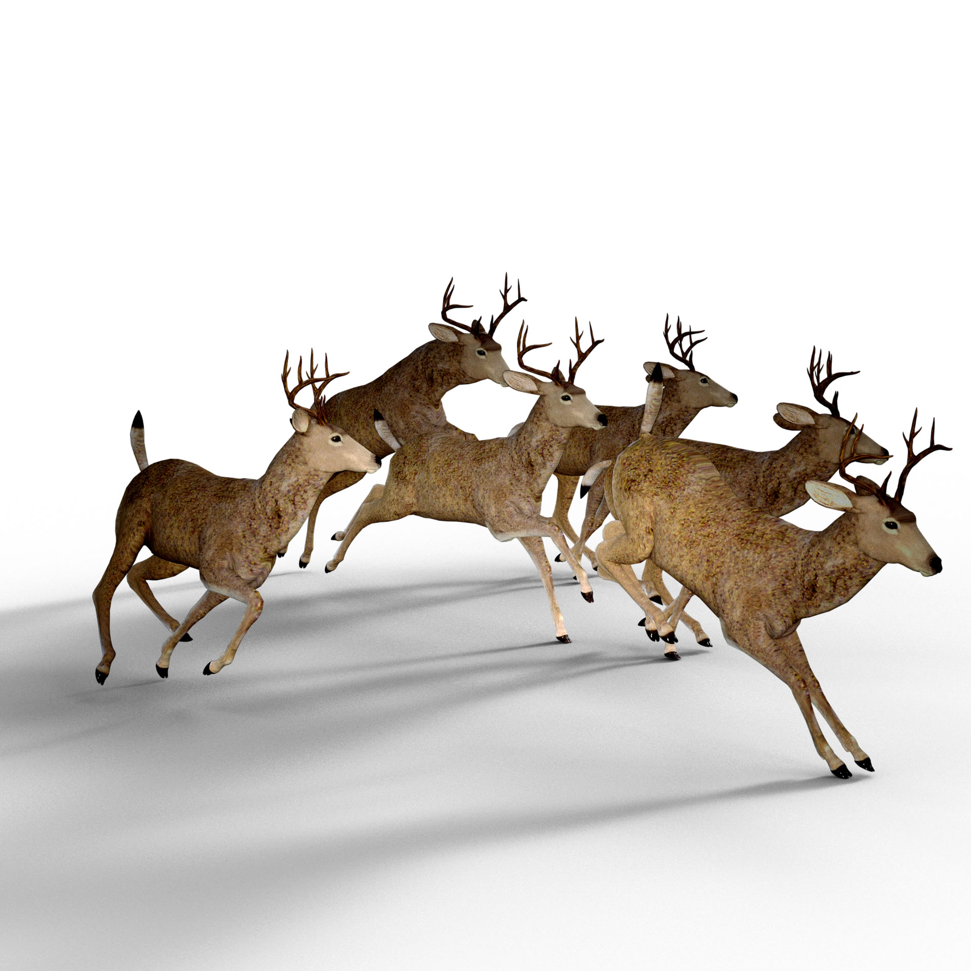 deer-1998968-1920.jpg