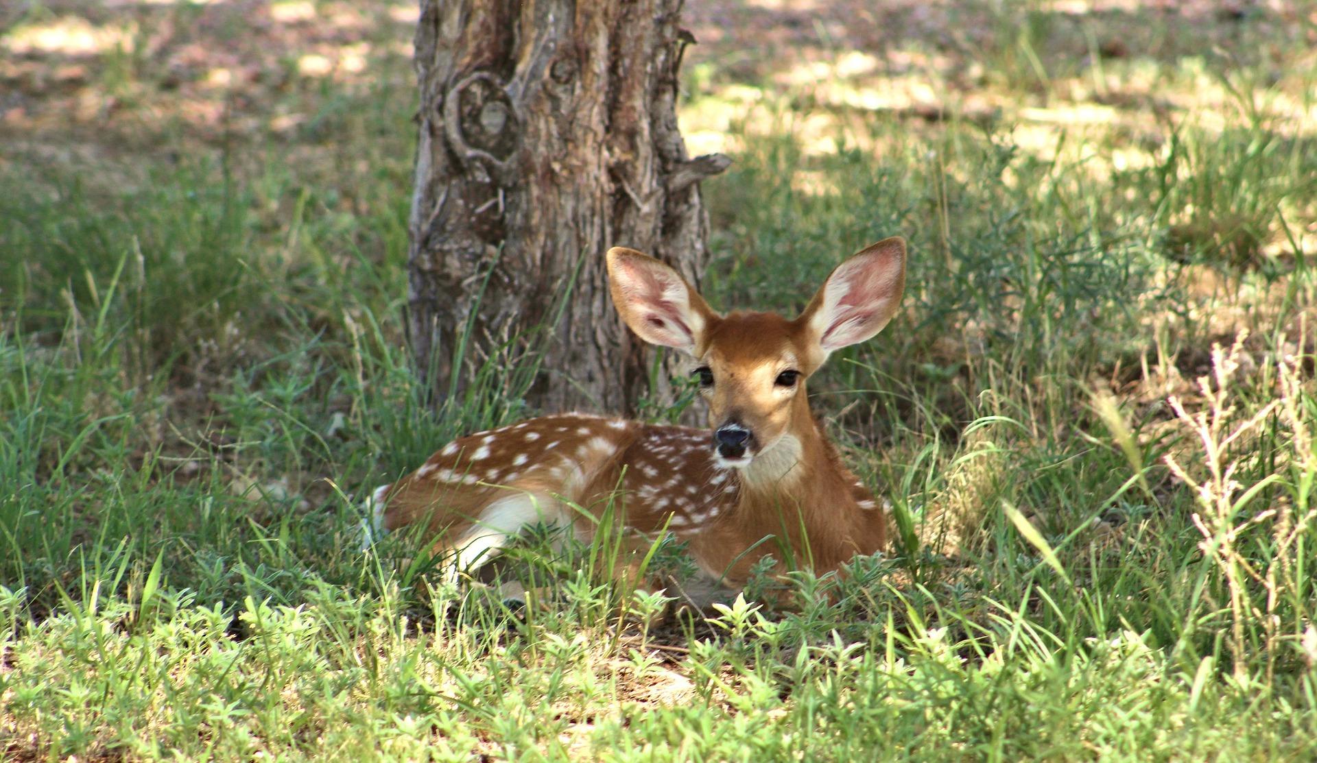 deer-2081638-1920-2-.jpg