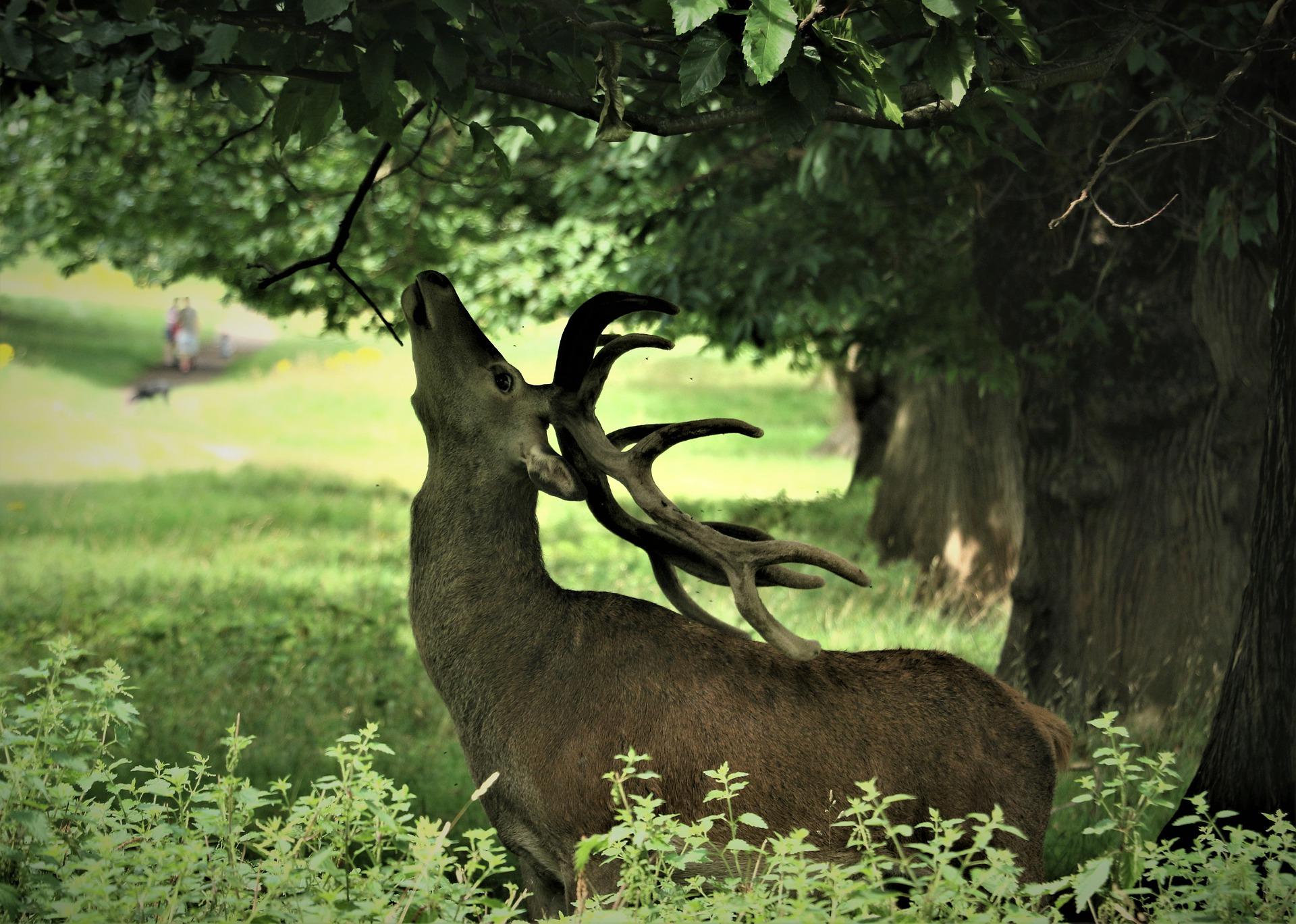 deer-4386713-1920.jpg