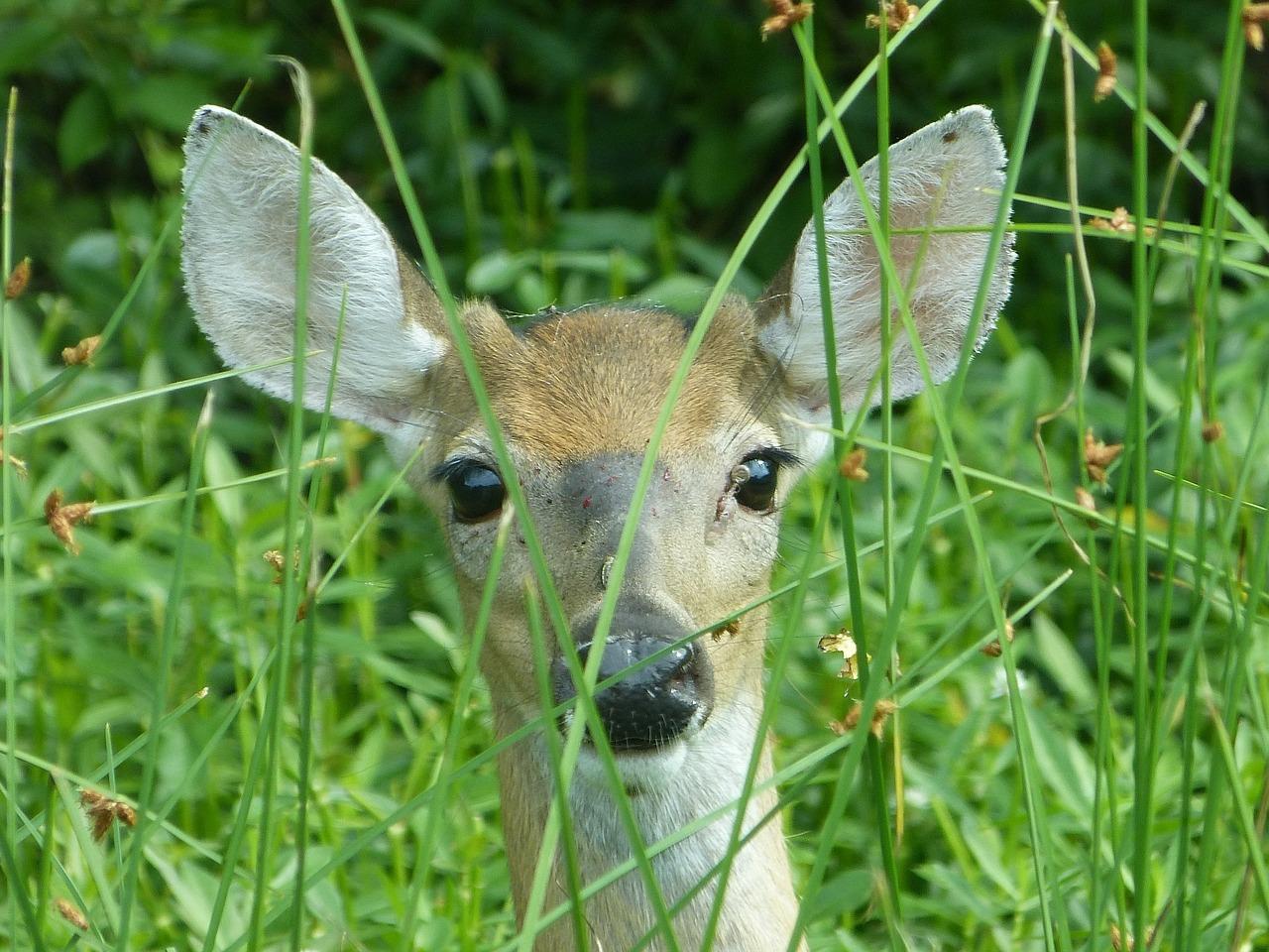 deer-981211-1280.jpg