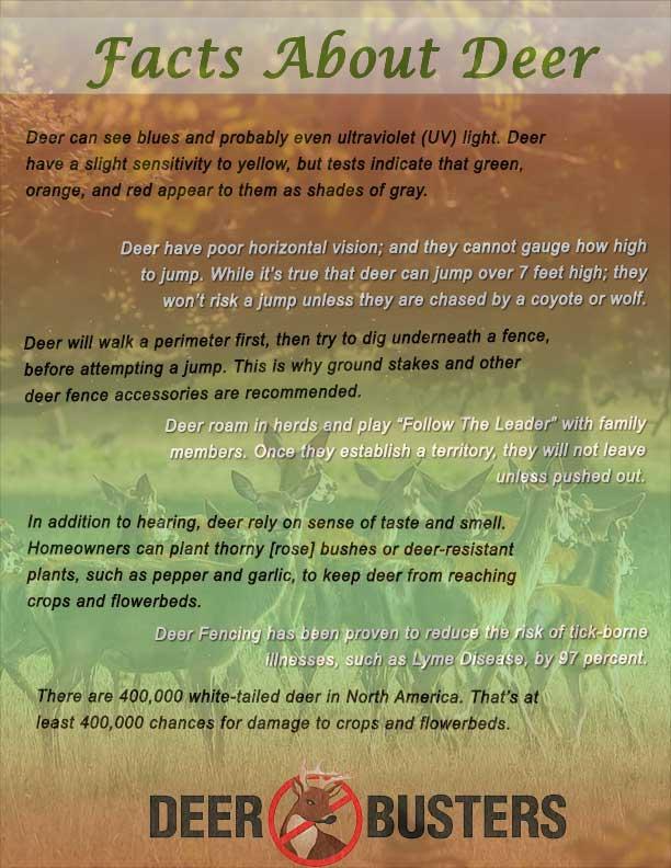 deer-facts-page.jpg