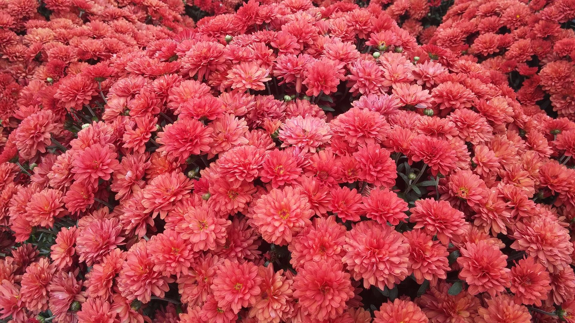 floral-994730-1920.jpg