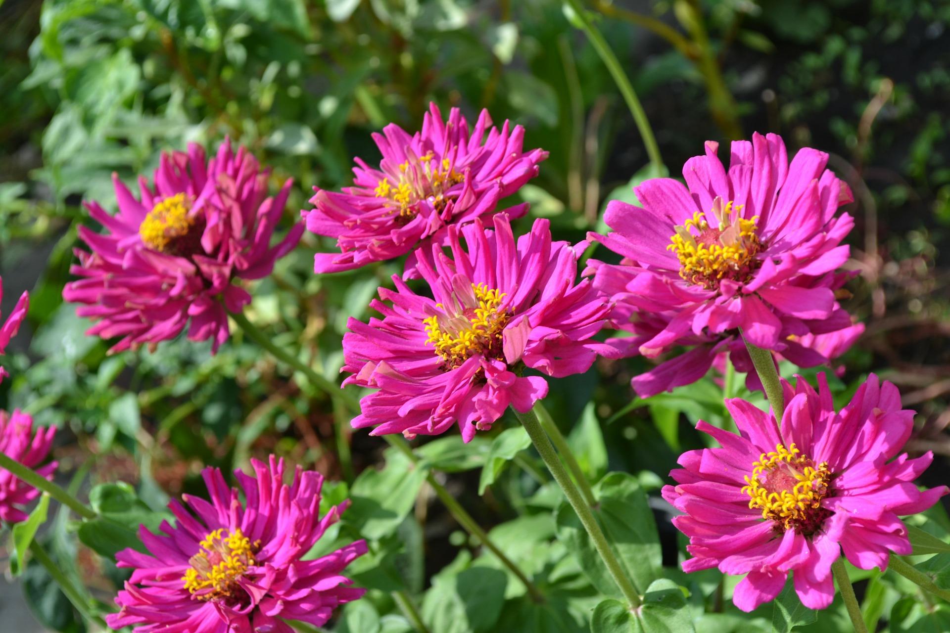 flower-110692-1920.jpg
