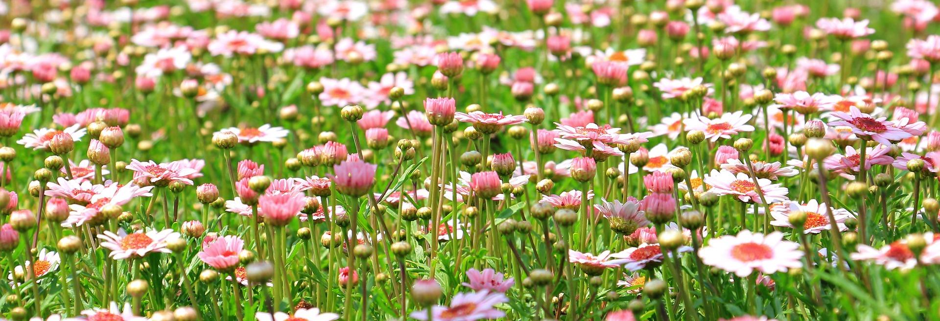 flower-meadow-1510602-1920.jpg
