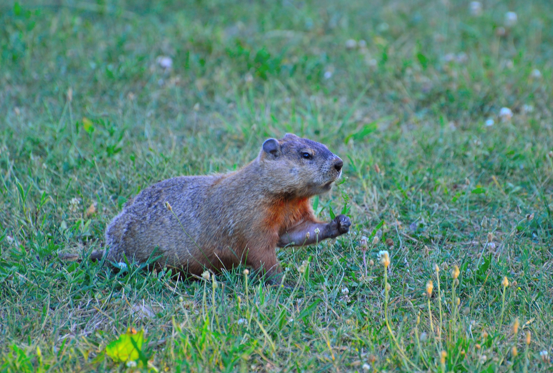 Best Fence For Groundhogs Deerbusters Com