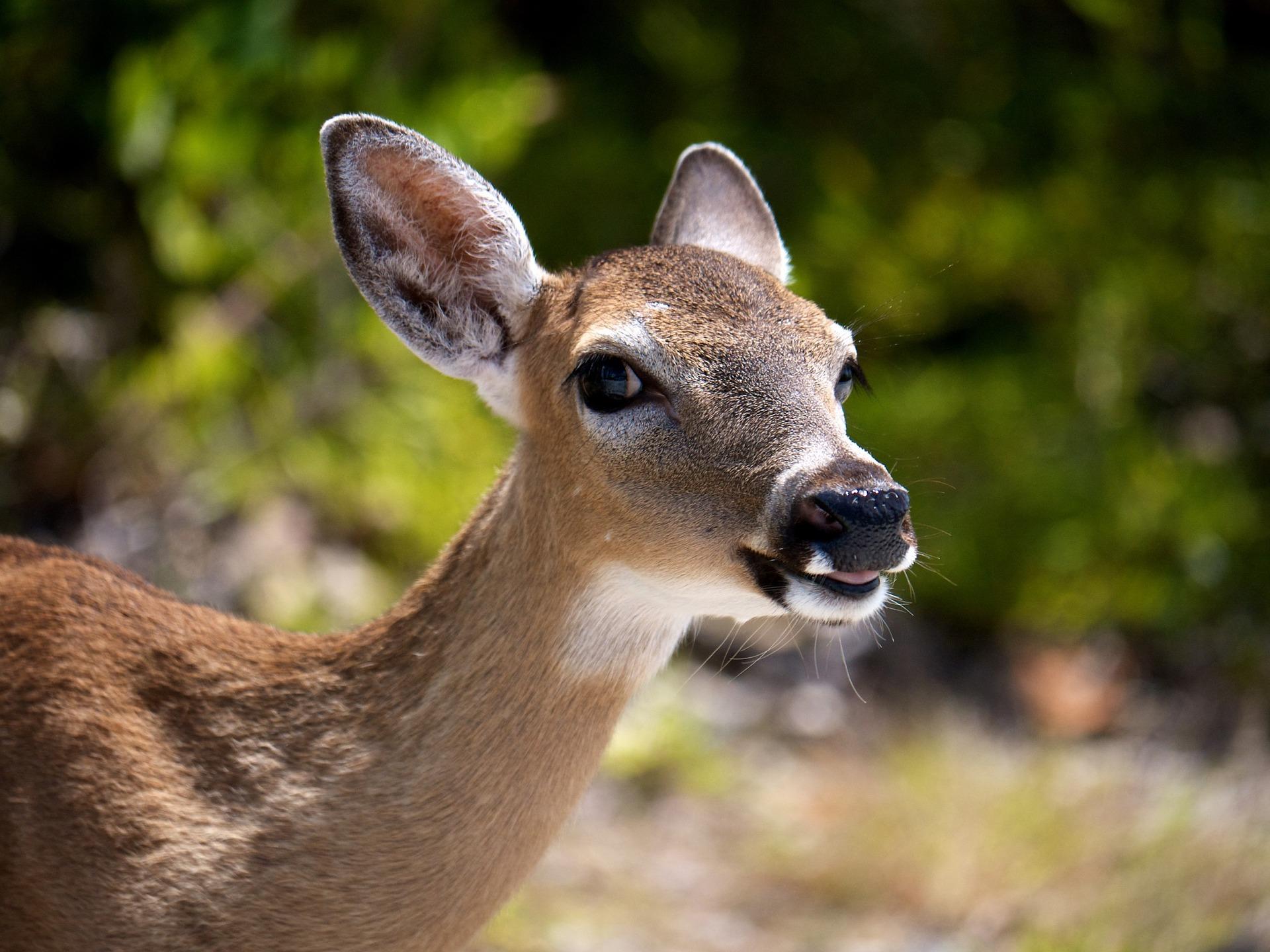 Agricultural Damage By Wildlife Deerbusters Com