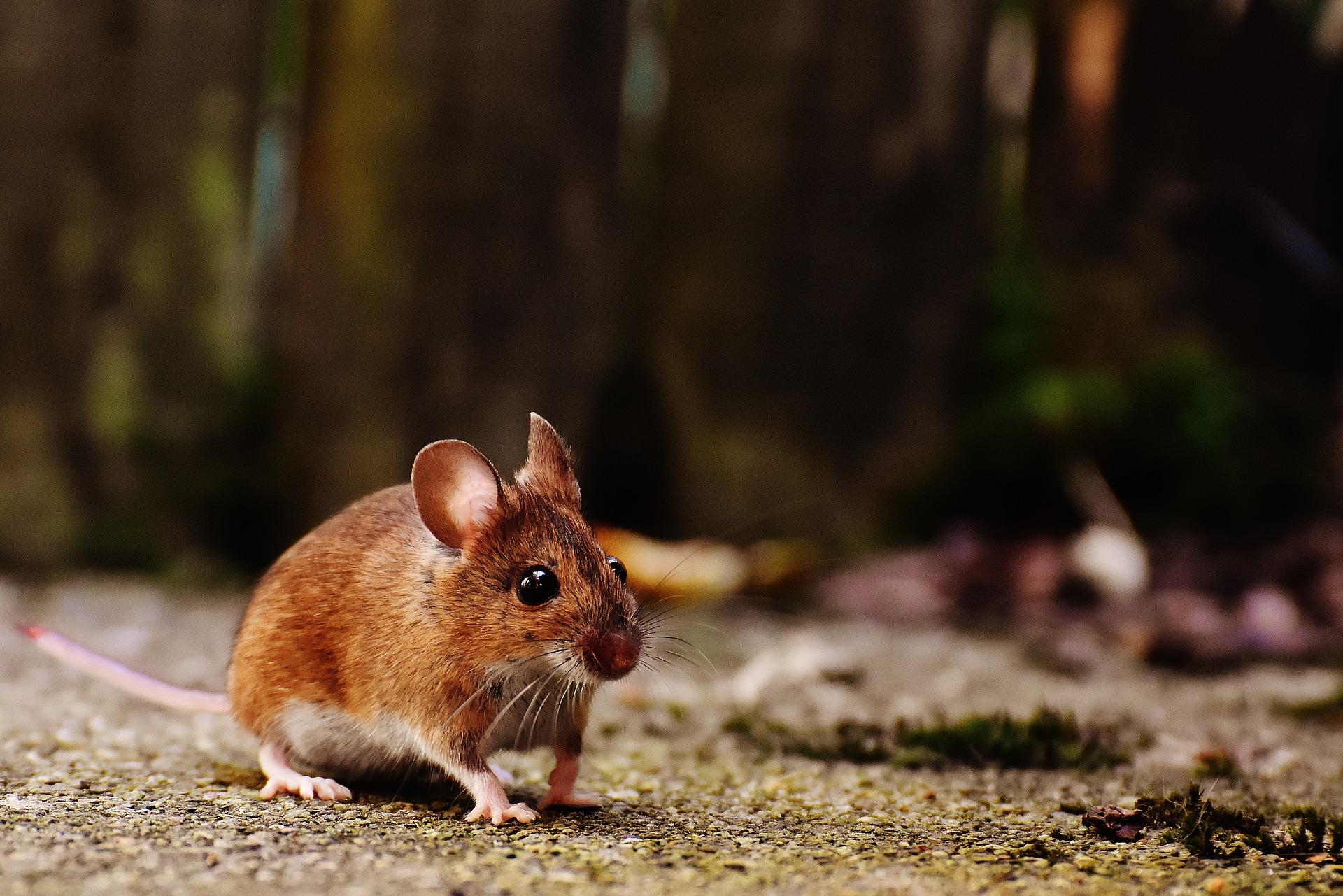 Rodent Awareness Week 2017 - DeerBusters.com