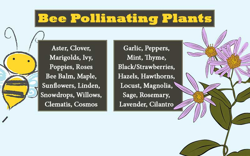 pollinating-flowers.jpg