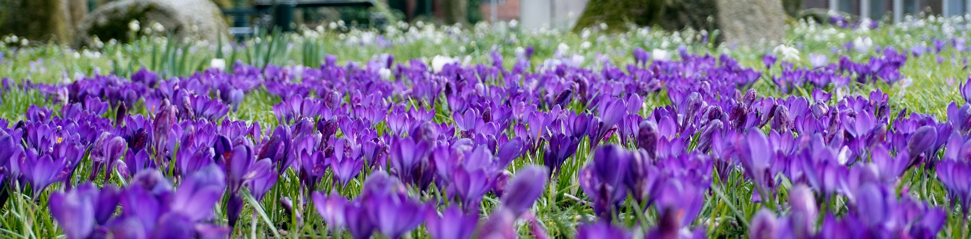 purple-3284962-1920.jpg