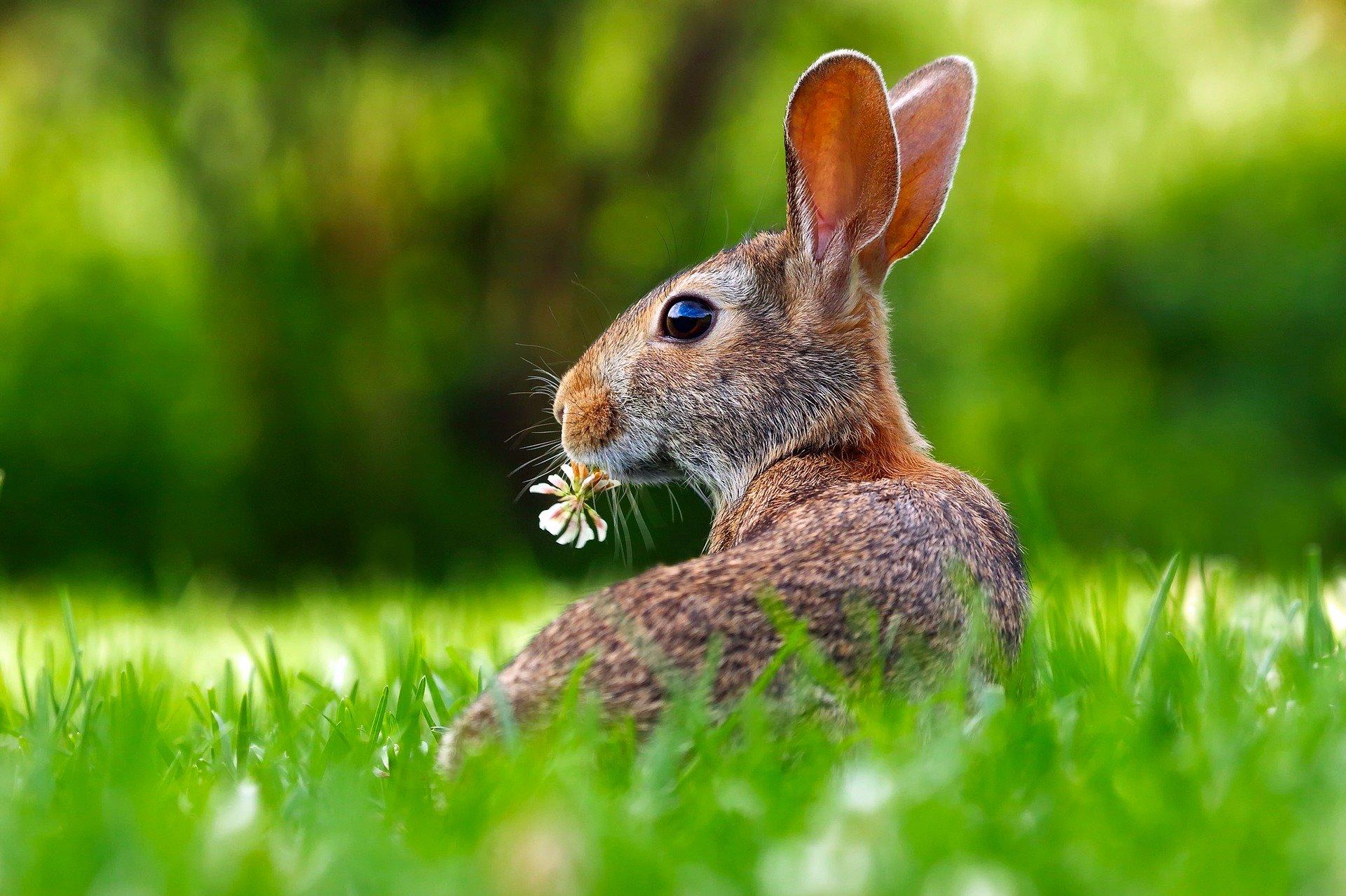 Rabbit Management In Winter - DeerBusters com