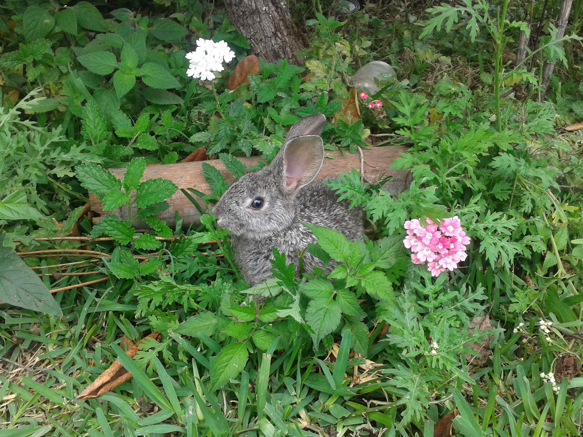 Rabbit Damage In Gardens Deerbusters Com