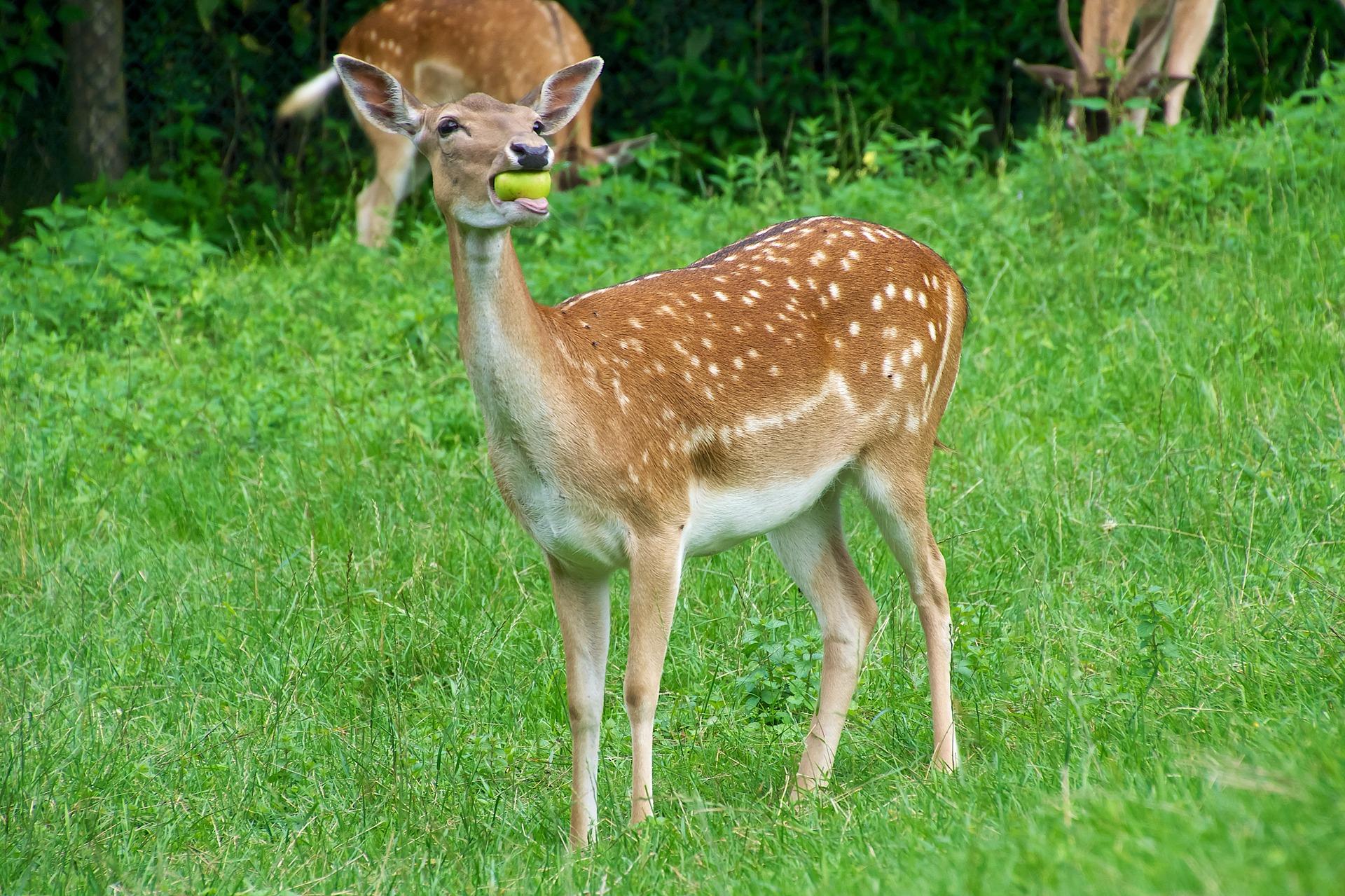 Types Of Plants Deer Eat Deerbusters Com