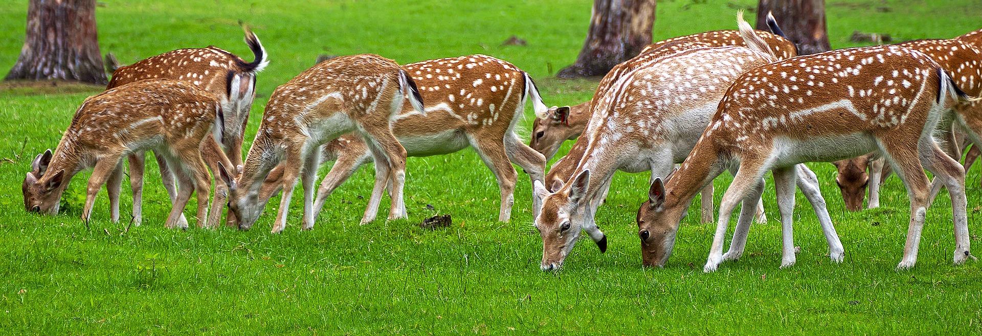 Warning Signs Of Chronic Wasting Disease Deerbusters Com