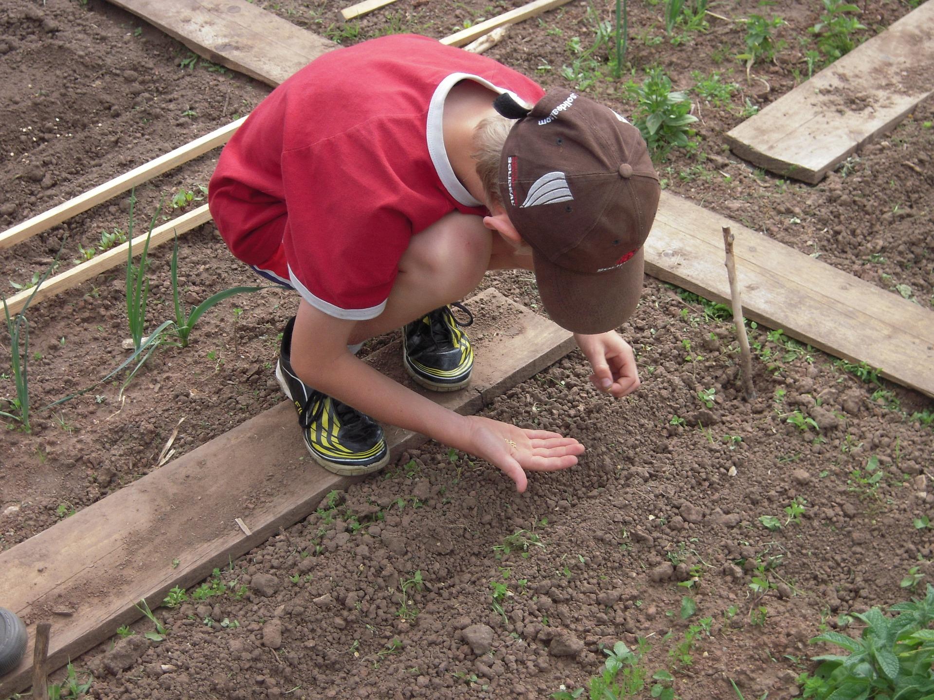 school-garden-1737325-1920.jpg