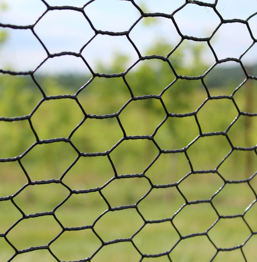 steel-web-cat-pic-79986.1327418297.1280.1280-90777.1494855048.1280.1280.original.jpg