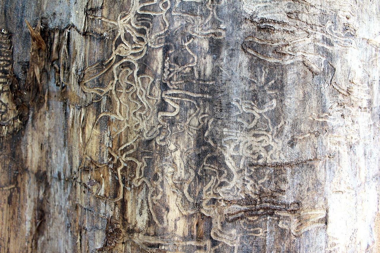 termite-71313-1280.jpg