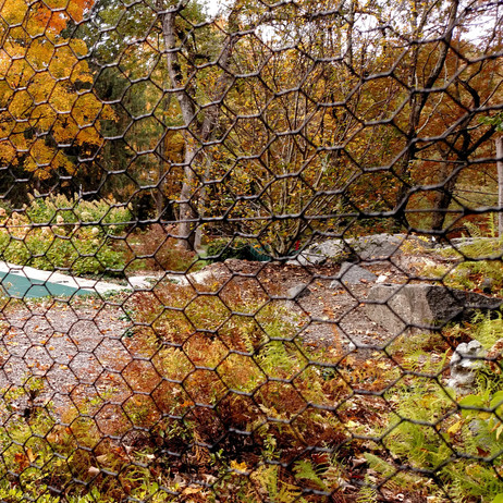 Steel hex and fall foliage