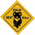 Australian koala road sign sticker