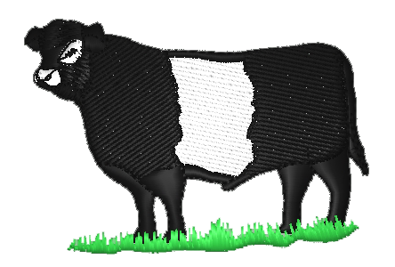 cow belted galloway
