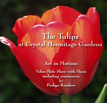 The Tulips at Crystal Hermitage Gardens DVD