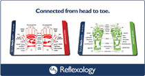 Body Back Company䋢 Reflexology Reference Card