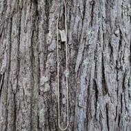 Tulsi Kanthi Tiny Bead Necklace