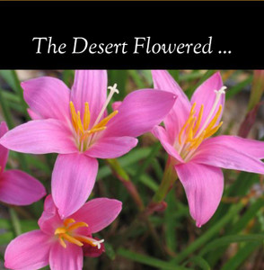 The Desert Flowered: Photo book of the cactus blooms and birds of the Monastery