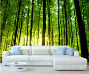 Sunshine Through Forest Trees Wall Mural