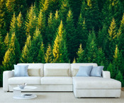 Evergreen Forest Wall Mural