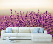 Purple Lavender Flowers Wall Mural