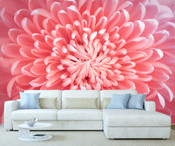 Pink Chrysanthemum Flower Wall Mural