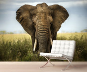 African Safari Elephant Wall Mural